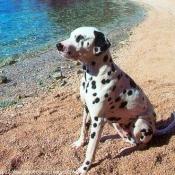 Photo de Dalmatien