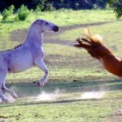 Photo de Races différentes
