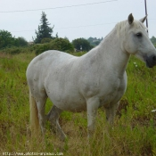 Photo de Camargue
