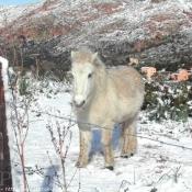 Photo de Shetland