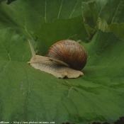 Photo d'Escargot