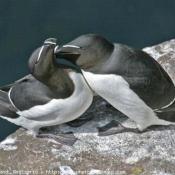 Photo de Petit pingouin