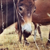 Photo de Mule