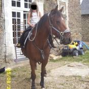 Photo de Poney français de selle