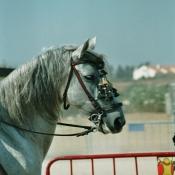 Photo de Pure race espagnol