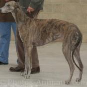 Photo de Greyhound