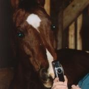 Photo de Quarter horse