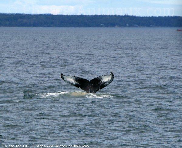 Photo de Baleine