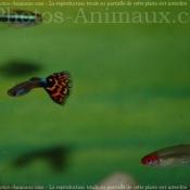 Photo de Poissons exotiques