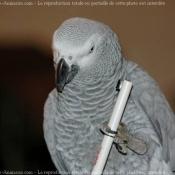 Photo de Perroquet