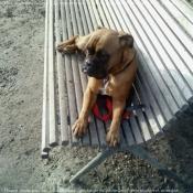 Photo de Boxer