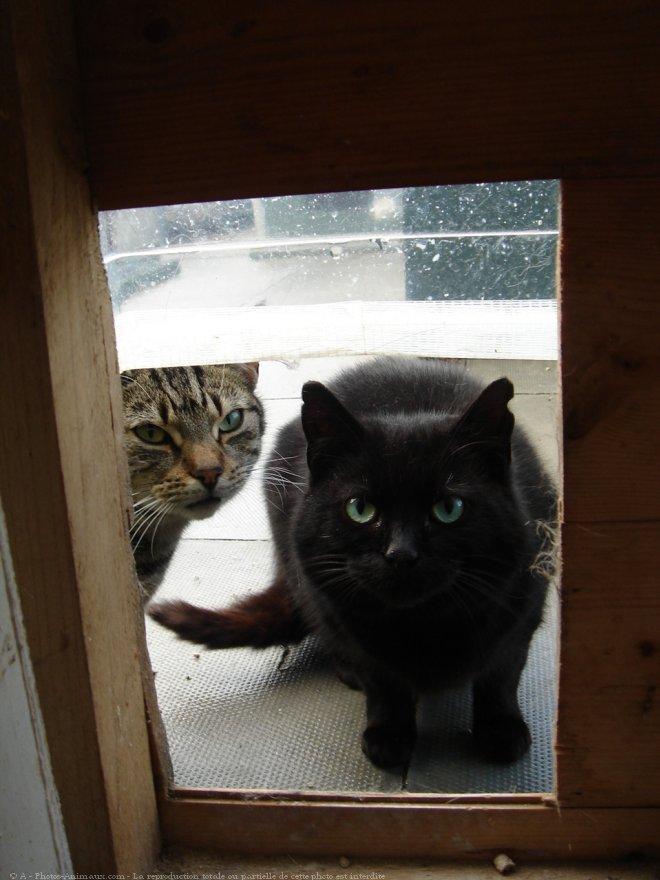 photo chat domestique