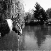 Photo de Croisement
