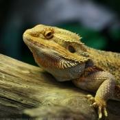 Les fonds d'écran Reptiles de vanesa