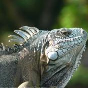Les fonds d'écran Reptiles de kikiwi