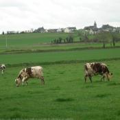 Photo de Vache