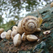 Photo d'Escargot
