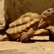 Les fonds d'écran Reptiles de meggy16