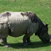 Photo de Rhinocéros