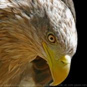 Les fonds d'écran Oiseaux de josine