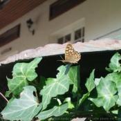 Photo de Papillon