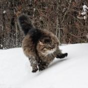 Photo de Siberien