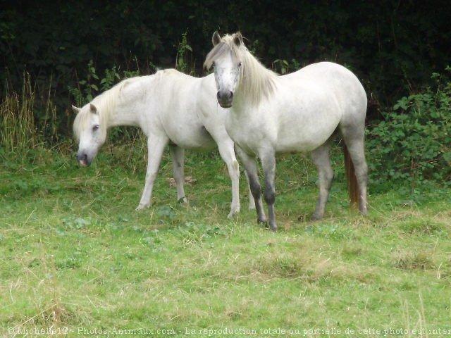 Photo de Dartmoor