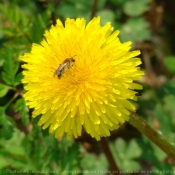 Photo d'Abeille