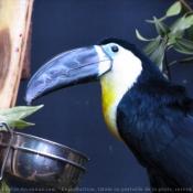 Photo de Toucan ariel