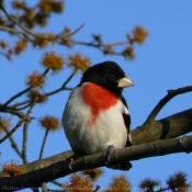 Photo de Cardinal