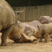 Photo de Rhinocéros
