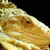 Les fonds d'écran Reptiles de chamy
