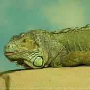 Les fonds d'écran Reptiles de _ma14_