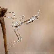 Toutes les photos d'arthropodes