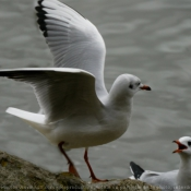 Photo de Mouette