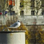 Photo de Mouette