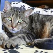 Les fonds d'écran Chats de gattou