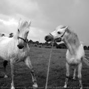 Photo de Connemara