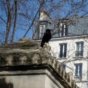 Photo de Corneille
