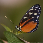 Fond d'écran avec photo de Papillon