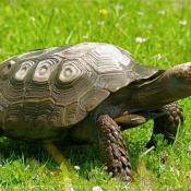 Les fonds d'écran Reptiles de Grabuge