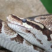 Photo de Serpent