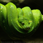 Fond d'écran avec photo de Python