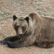Photo d'Ours
