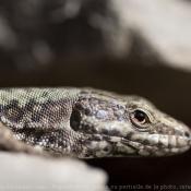Les fonds d'écran Reptiles de doyou