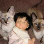 Photo d'Oriental