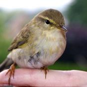 Les fonds d'écran Oiseaux de larentia