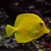 Les fonds d'écran Animaux aquatiques de modile
