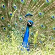 Les fonds d'écran Oiseaux de hurley_92