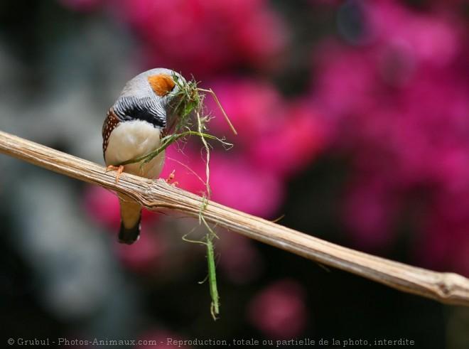 Photo de Mandarin